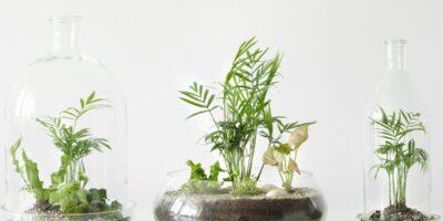 how to make a bottle garden