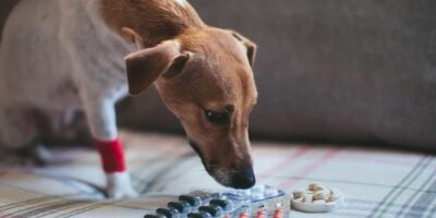 painkiller for dogs