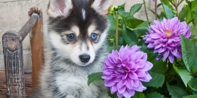 how to make a home puppy friendly