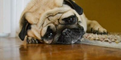 Unhappy dog