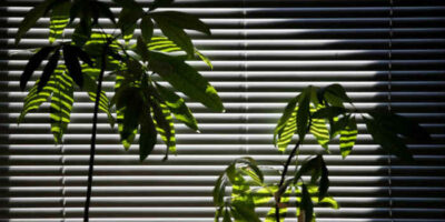 use indoor plants to cool a room