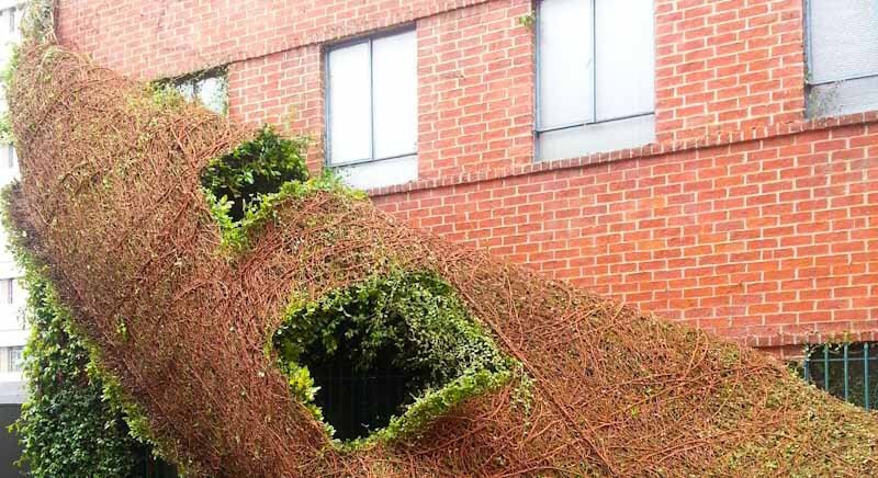 remove ivy vines from a wall easily