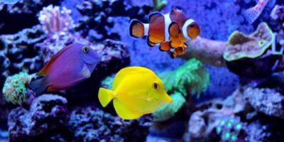 set up an aquarium for beginners