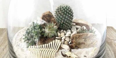 make a cactus terrarium easily