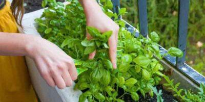 grow plants on a shady balcony