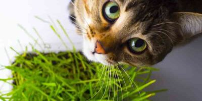 plants that poison cats