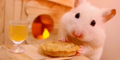feed hamsters and other rodents