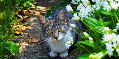 Keep cats out of your garden
