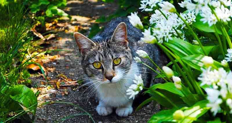 How To Keep Other Cats Out Of Your Garden - Confessions of ...