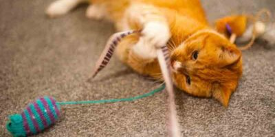 prevent cat boredom in your absence