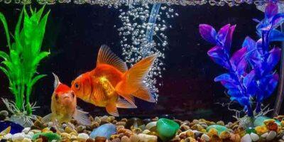 build an aquarium