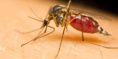 repel mosquitoes with natural remedies