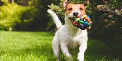make your own pet toys