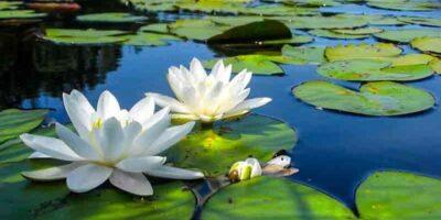 DIY 'lotus effect' cleaners