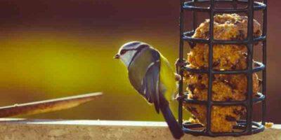 make a natural birdseed bell