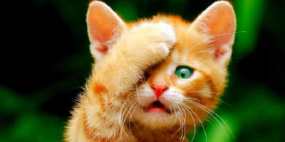 get rid of cat urine smell