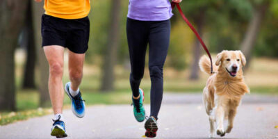 keep a dog fit and healthy