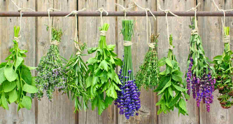 best ways to dry herbs properly