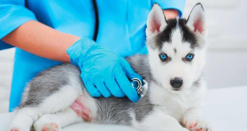 calm a pet to visit a vet