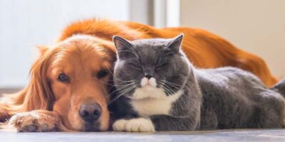 get a dog and cat to like each other