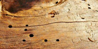 get rid of woodworm with home remedies