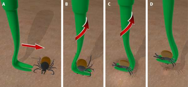 remove a tick correctly (2)