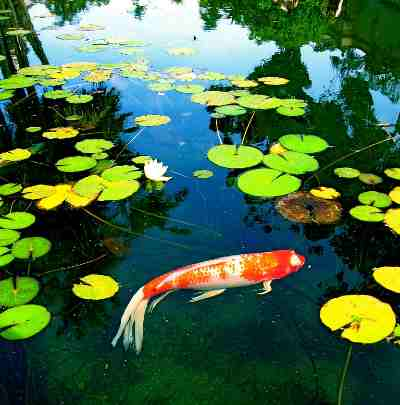 build your own pond filter system