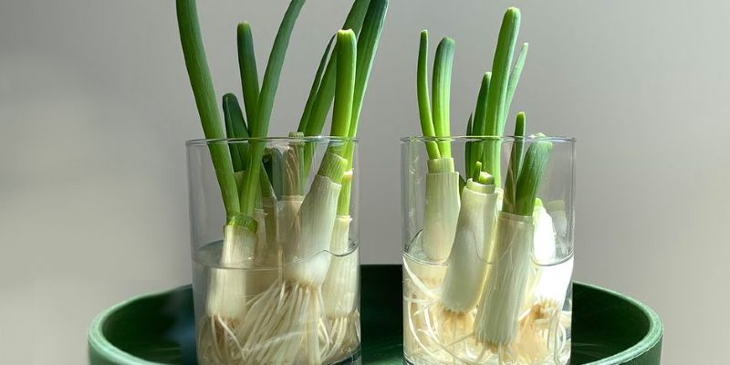 how to grow green onions (1)