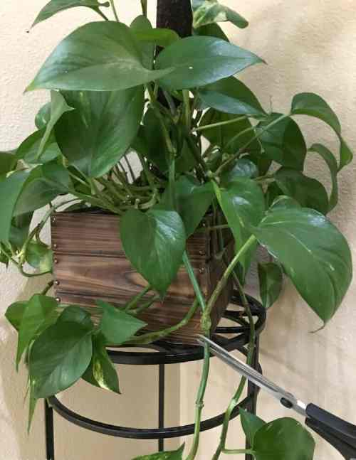 how to propagate pothos
