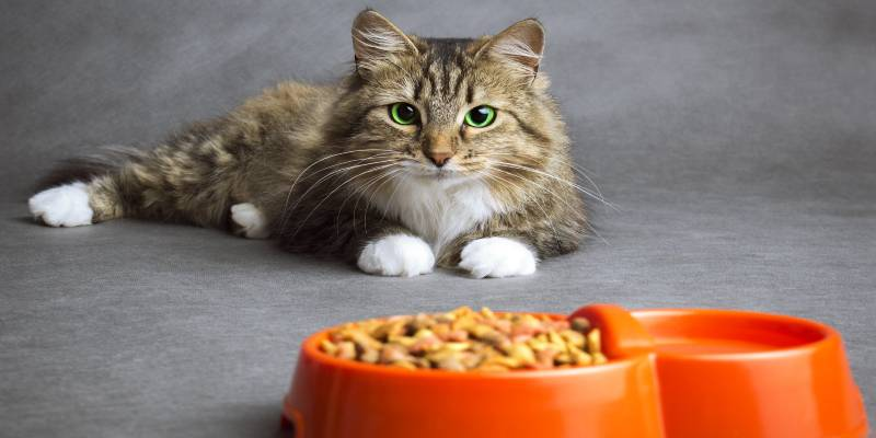 how much to feed a cat