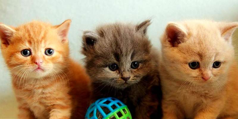 how to tell kittens age