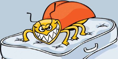 How to get rid of bed bugs permanently 1